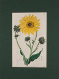Antiques:Posters & Prints, Four Lovely Hand-Colored Floral Prints from The BotanicalRegister and others. [London: ca. 1820's]. General mil...(Total: 4 Items)