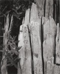 Photographs:20th Century, ANSEL ADAMS (American, 1902-1984). Moth and Stump, InterglacialForest, Portfolio II, 1949. Gelatin silver, 1950. 8 x 6-...