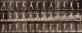 Photographs:Historical Photographs, EADWEARD MUYBRIDGE (British, 1830-1904). Motion Study from Animal Locomotion Plate 175, 1887. Collotype. Paper: 19 x 24 ...