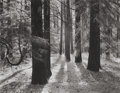 Photographs:20th Century, ANSEL ADAMS (American, 1902-1984). Forest Floor, YosemiteValley, 1950. Gelatin silver, 1979. 15 x 19-1/4 inches (38.1x...