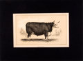 Antiques:Posters & Prints, Four Tinted Lithographed Engravings of Breeds of Cattle.... (Total:4 Items)