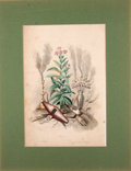 Antiques:Posters & Prints, [J. J. Grandville]. Four Hand-Colored Plates from The FlowersPersonified.... (Total: 4 Items)