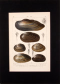 Antiques:Posters & Prints, Four Hand-Colored Engravings of Seashells.... (Total: 4 Items)