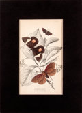 Antiques:Posters & Prints, Six Hand-Colored Engravings of Lepidoptera (Moths).... (Total: 6Items)