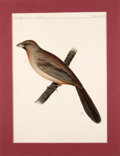 Antiques:Posters & Prints, Four Hand-Colored Prints of Birds from the United States PacificRail-Road Expedition.... (Total: 4 Items)