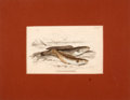 Antiques:Posters & Prints, Four Hand-Colored Engravings of Fish Out of Water.... (Total: 4 Items)