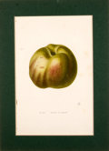 Antiques:Posters & Prints, Four Hand-Colored Engravings of Fruits.... (Total: 4 Items)