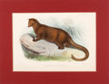 Antiques:Posters & Prints, Four Hand-Colored Prints of Small Mammals... (Total: 4 Items)