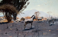 WILHELM KUHNERT (German, 1865-1926) Zebras, 1912 Oil on canvas 24 x 36 inches (61.0 x 91.4 cm)