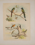Antiques:Posters & Prints, Four Lovely Chromolithographic Plates of Birds. [ca. 1880]. Includes hummingbirds. Approximately 15 x 11.5 inches. Mild toni... (Total: 4 Items)
