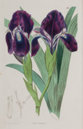 Decorative Arts, British:Other , A SET OF EIGHT FRAMED ENGLISH HAND COLORED ENGRAVINGS OF BOTANICALSAFTER EDWARDS . Sydenham Edwards (English, 1768-1819), c... (Total:8 Items)