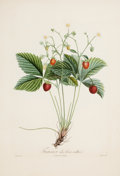 Fine Art - Work on Paper:Print, A SET OF FOUR FRAMED FRENCH HAND COLORED STIPPLE ENGRAVINGS OF STRAWBERRIES AFTER POITEAU . Pierre-Antoine Poiteau (French, ... (Total: 4 Items)