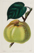 Fine Art - Work on Paper:Print, A SET OF SIX FRAMED ENGLISH HAND COLORED ENGRAVINGS OF APPLES, PEARS AND PEACHES AFTER JOHN LINDLEY . John Lindley (British,... (Total: 6 Items)
