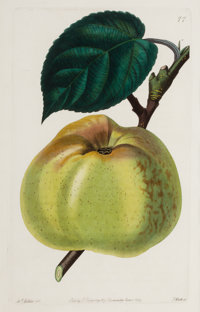 A SET OF SIX FRAMED ENGLISH HAND COLORED ENGRAVINGS OF APPLES, PEARS AND PEACHES AFTER JOHN LINDLEY John Lindley