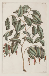 A SET OF FOUR FRAMED FRENCH HAND-COLORED ENGRAVINGS OF TREE SECTIONS AFTER BOUCHOZ Pierre Bouchoz, circa 1779