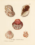 Fine Art - Work on Paper:Print, A SET OF SIX FRAMED DUTCH HAND COLORED ENGRAVINGS OF SHELLS AFTER KNORR . Wolfgang Knorr, Amsterdam, Holland, circa 1786. Pr... (Total: 6 Items)