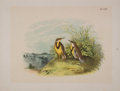 Antiques:Posters & Prints, Four Lovely Chromolithographic Plates of Birds. [ca. 1880].Approximately 15 x 11.5 inches. Mild toning and foxing with mino...(Total: 4 Items)