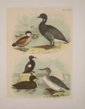 Antiques:Posters & Prints, Eight Chromolithographic Plates of Birds. [ca. 1880]. Includesducks. Approximately 15 x 11.5 inches. Mild toning and foxing...(Total: 8 Items)