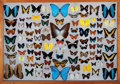 Zoology:Mounted Insects, FRAMED BUTTERFLY COLLECTION. ...