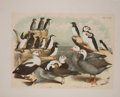 Antiques:Posters & Prints, Seven Chromolithographic Plates of Birds. [ca. 1880]. Includespenguins. Approximately 15 x 11.5 inches. Mild toning and fox...(Total: 7 Items)
