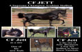 Autographs:Bats, Horse Lover's Dreams. Arabian Stallion with 2012 Kentucky Derby Fantasy...