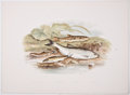 Antiques:Posters & Prints, A. F. Lydon, artist. Two Chromolithograph Plates of Fish DepictingSpined Loach, Minnow, Loach, and Bleak; and Stickleback Var...(Total: 2 Items)