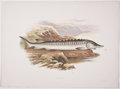 Antiques:Posters & Prints, A. F. Lydon, artist. Two Chromolithograph Plates of Fish Depicting Sturgeon and Salmon (Male) From British Fresh-Water F... (Total: 2 Items)