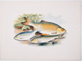 Antiques:Posters & Prints, A. F. Lydon, artist. Two Chromolithograph Plates of Fish DepictingAllis Shad and Twaite Shad; and Azurine, Dobule, and Rudd F...(Total: 2 Items)