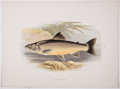 Antiques:Posters & Prints, A. F. Lydon, artist. Two Chromolithograph Plates of Fish DepictingLoch Killin Charr and Tench From British Fresh-Water ... (Total:2 Items)
