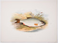 Antiques:Posters & Prints, A. F. Lydon, artist. Three Chromolithograph Plates of Fish Depicting Roach; Young Trout, Salmon Parr, and Smelt; and Chub From... (Total: 2 Items)
