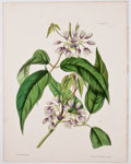 Antiques:Posters & Prints, Four Wonderful Attractive Hand-Colored Plates of Flowers FromPaxton's Flower Garden. London: Bradbury and Evans...(Total: 4 Items)