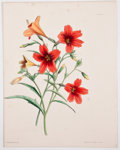 Antiques:Posters & Prints, Eight Attractive Hand-Colored Plates of Flowers, Five From Paxton's Flower Garden. London: Bradbury and Evans, 1850-... (Total: 8 Items)