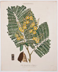 Antiques:Posters & Prints, Five Gorgeous Hand-Colored Plates of Flowers. [ca. 1850]. Lighttoning and foxing, else very good. 10.5 x 8.5 inches.... (Total: 5Items)