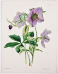 Antiques:Posters & Prints, Four Wonderful Attractive Hand-Colored Plates of Flowers FromPaxton's Flower Garden. London: Bradbury and Evans, 18...(Total: 4 Items)