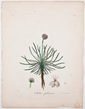 Antiques:Posters & Prints, Seven Gorgeous Hand-Colored Plates of Flowers. [ca. 1801]. Lighttoning and foxing, else very good. 11.5 x 8.5 inches.... (Total: 7Items)