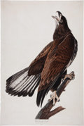 Antiques:Posters & Prints, John James Audubon (1785-1851). White-headed Eagle -- Plate CXXVI(Havell Edition). A striking hand-colored aquatint engravi...