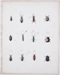 Antiques:Posters & Prints, Ebenezer Emmons. Seven Lithographs of Insects From Natural History of New York, Part V: Agriculture. [Albany: C. Von... (Total: 7 Items)