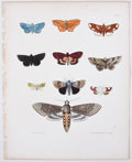 Antiques:Posters & Prints, Ebenezer Emmons. Four Lithographs of Insects From NaturalHistory of New York, Part V: Agriculture. [Albany: C. Von ...(Total: 4 Items)