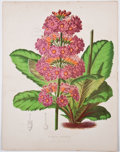 Antiques:Posters & Prints, Five Color Botanical Plates. [London: n. p., ca. 1800's]. All havefold lines. Light toning and a few spots of foxing, else ...(Total: 5 Items)