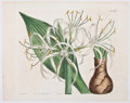 Antiques:Posters & Prints, Four Hand-Colored Botanical Plates. [London: n. p., ca. 1800's].All have fold lines. Light toning and a few spots of foxing...(Total: 4 Items)