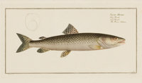 FRAMED SET OF FOUR HAND-COLORED ENGRAVINGS OF SALMON, AFTER MARCUS ELIZER BLOCH, AMSTERDAM, 1874 9-1/2 x 16 inche