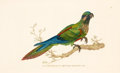Decorative Prints, European:Prints, SET OF SEVEN HAND-COLORED ENGRAVINGS OF PARROTS AND OTHER TROPICALBIRDS, AFTER EDWARD DONOVAN, LONDON, 1824 . 9 x 5-1/2 inc...(Total: 7 Items)