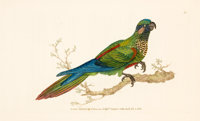 SET OF SEVEN HAND-COLORED ENGRAVINGS OF PARROTS AND OTHER TROPICAL BIRDS, AFTER EDWARD DONOVAN, LONDON, 1824 9 x