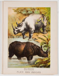 Antiques:Posters & Prints, Lot of 17 Vintage Color Lithographs of Animals....