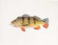 Mainstream Illustration, FLICK FORD (American, b. 1954). Butterfly Peacock Bass, Fish, 77Great Fish of North America, pages 62-63, 2006. Waterco...