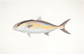Mainstream Illustration, FLICK FORD (American, b. 1954). Greater Amberjack, Fish, 77Great Fish of North America, pages 128-129, 2006. Watercolor...
