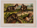 Antiques:Posters & Prints, Lot of 18 Vintage Color Lithographs of Animals....