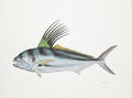 Mainstream Illustration, FLICK FORD (American, b. 1954). Roosterfish, Big, The 50Greatest World Record Catches, pages 86-87, 2008. Watercoloron...