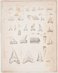 Antiques:Posters & Prints, Lot of 21 Vintage Plates Featuring California Fossils andPaleontological Scenes. From Reports of Explorations andSurveys...