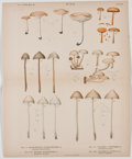 Antiques:Posters & Prints, Lot of 5 Color Plates Featuring Various Mushroom Varieties. Fromthe New York State 56th Annual Report, 1902, Albany: Un...